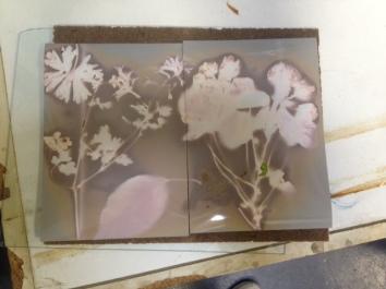 Lumen Prints - Light Works Project