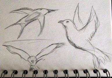 birds over dawlish train station